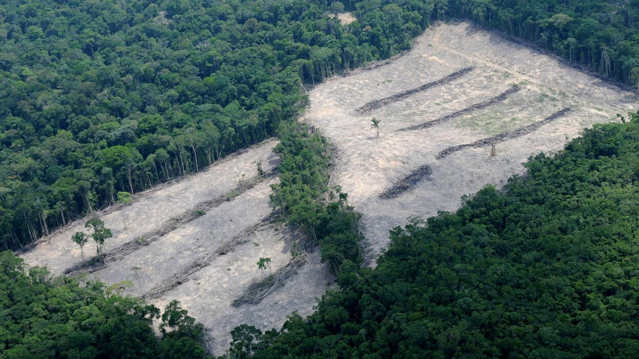 Regenwald Abholzung In Brasilien Mehr Als Eine Million