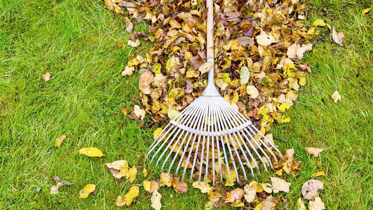 Naturschutz Im Garten Laub Im Winter Liegen Lassen Oko Test