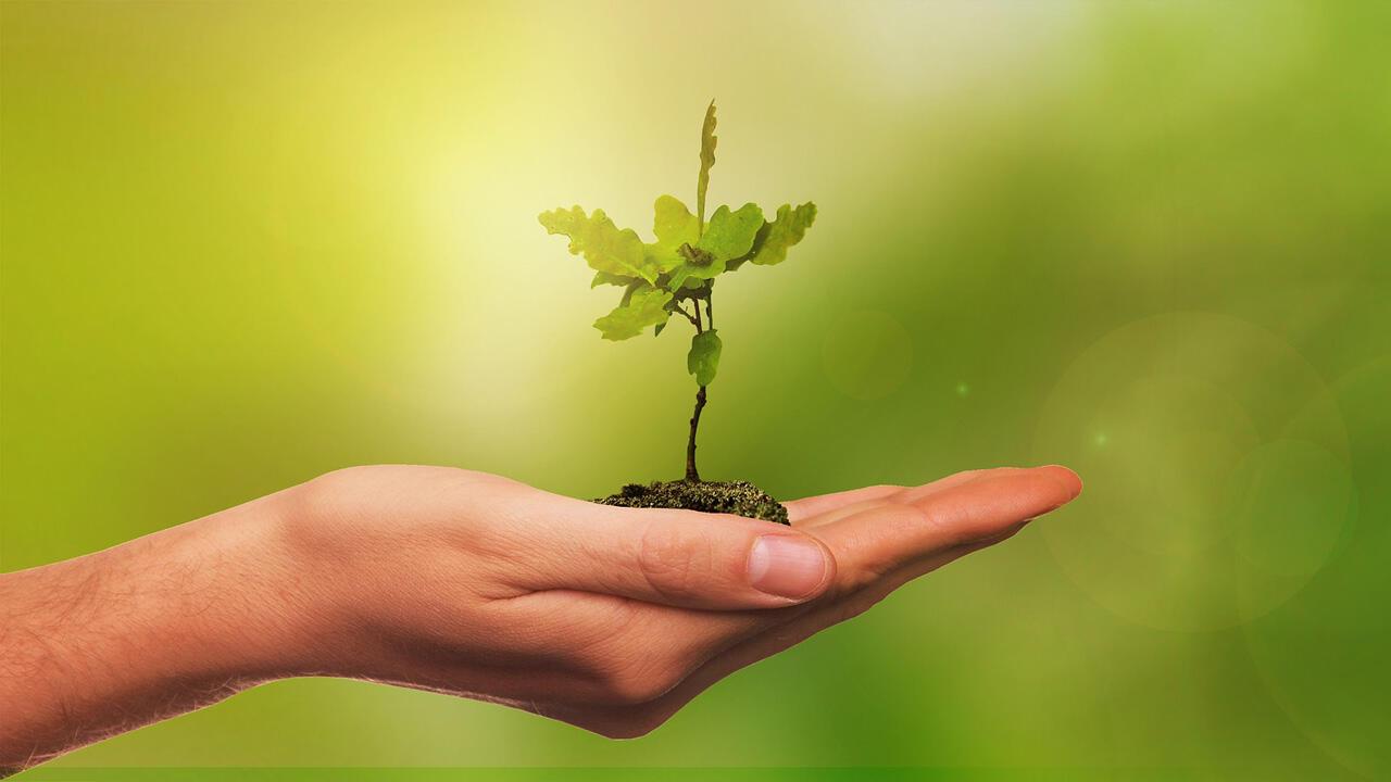 Aktion Einheitsbuddeln Bäume Pflanzen Am Tag Der Deutschen