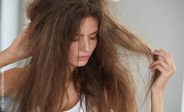 Shampoo Für Trockene Haare Im Test Welche Shampoos Wir Für Die
